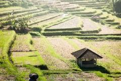 Bali_2010_Ubud_1_115